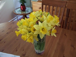 Daffodils_in_a_vase