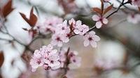 Spring__(8545350326)